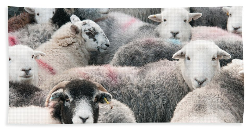 Buttermere Lake Hand Towel featuring the photograph The Herdwicks by Smart Aviation