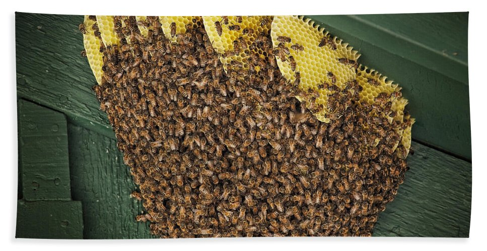 Bee Hives Hand Towel featuring the photograph The Hive by Kelley King