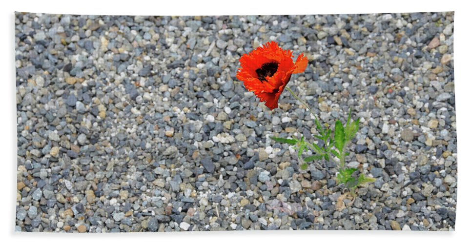 Poppy Bath Towel featuring the photograph The Hopeful Poppy by Michael Bessler