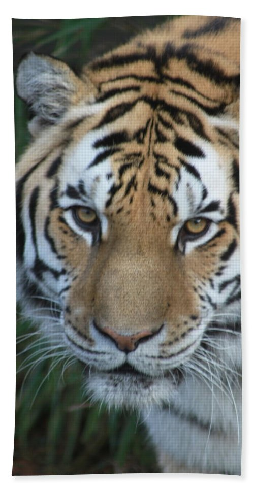 Tiger Hand Towel featuring the photograph The Hunter by Laddie Halupa