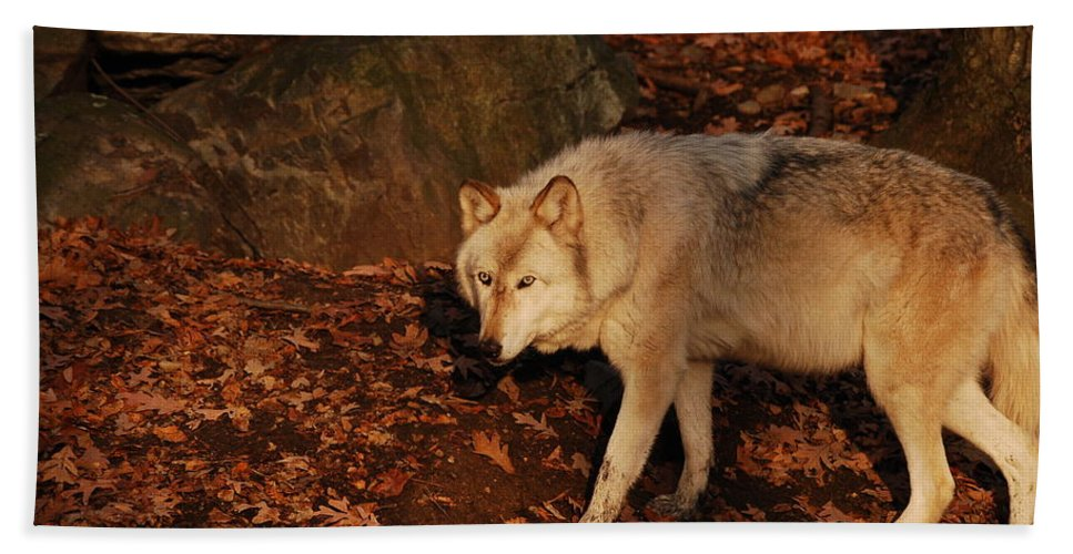 Wolf Hand Towel featuring the photograph The Hunter by Lori Tambakis