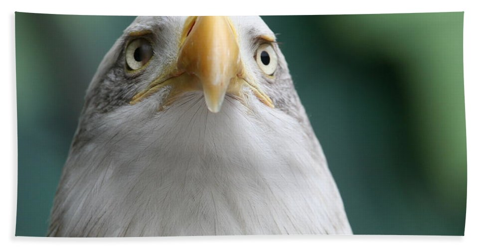 Eagle Hand Towel featuring the photograph The Hunters Stare by Laddie Halupa