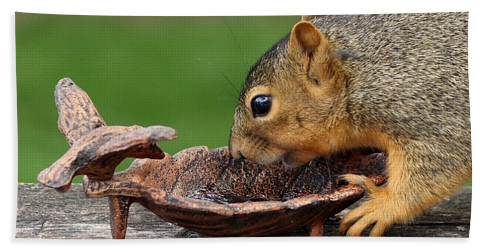 Squirrel Hand Towel featuring the photograph The Jelly Theif by Lori Tordsen