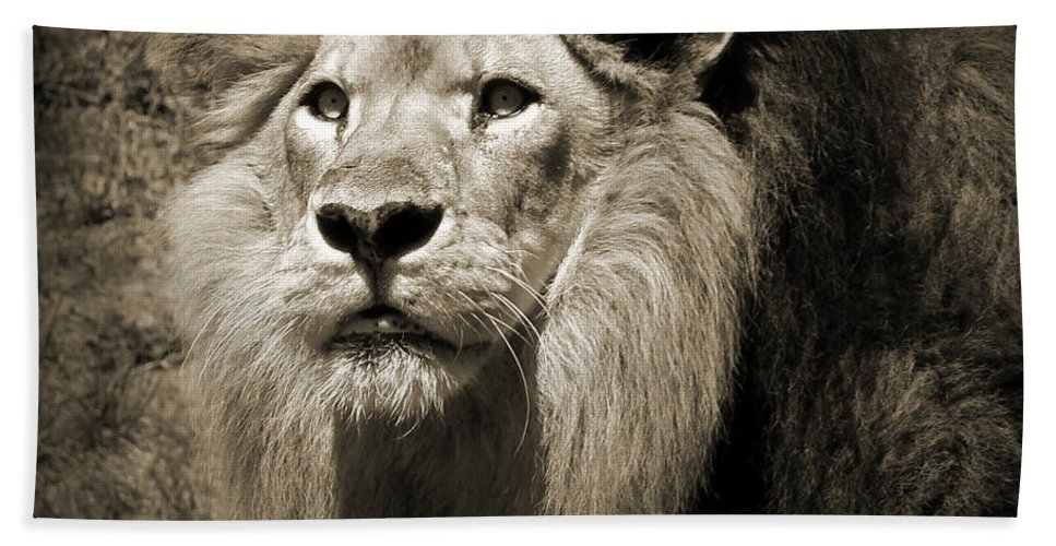 Lion Hand Towel featuring the photograph The King II by Steven Sparks