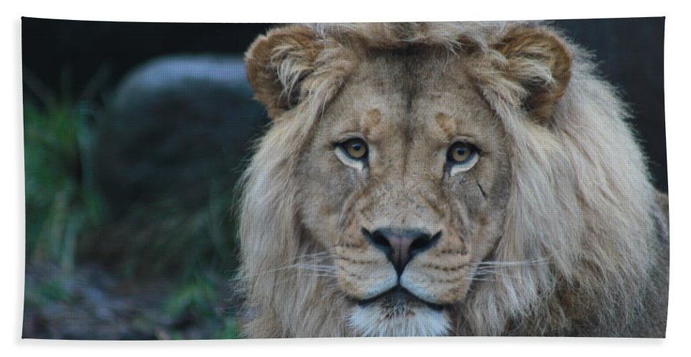 Lion Hand Towel featuring the photograph The King by Laddie Halupa