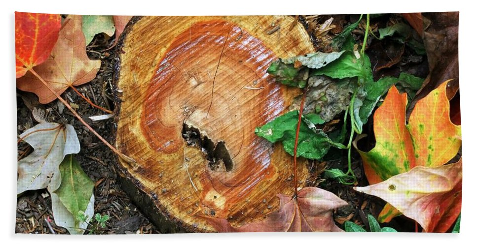 Autumn Bath Sheet featuring the photograph The Last Of The Old Yew by RC DeWinter