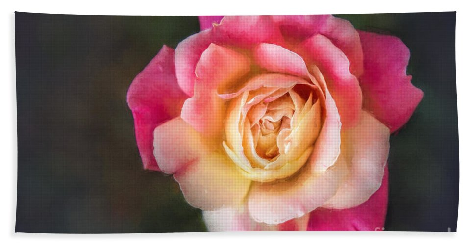 Nature Hand Towel featuring the photograph The Last Rose Of Summer, Painting by Sharon McConnell