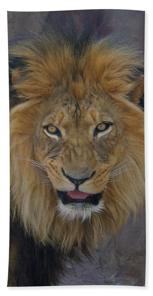 Lion Bath Sheet featuring the photograph The Lion Dry Brushed by Ernie Echols