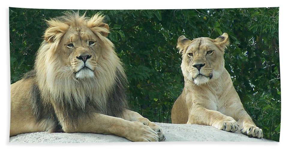Lion Hand Towel featuring the photograph The Lions by Ernie Echols