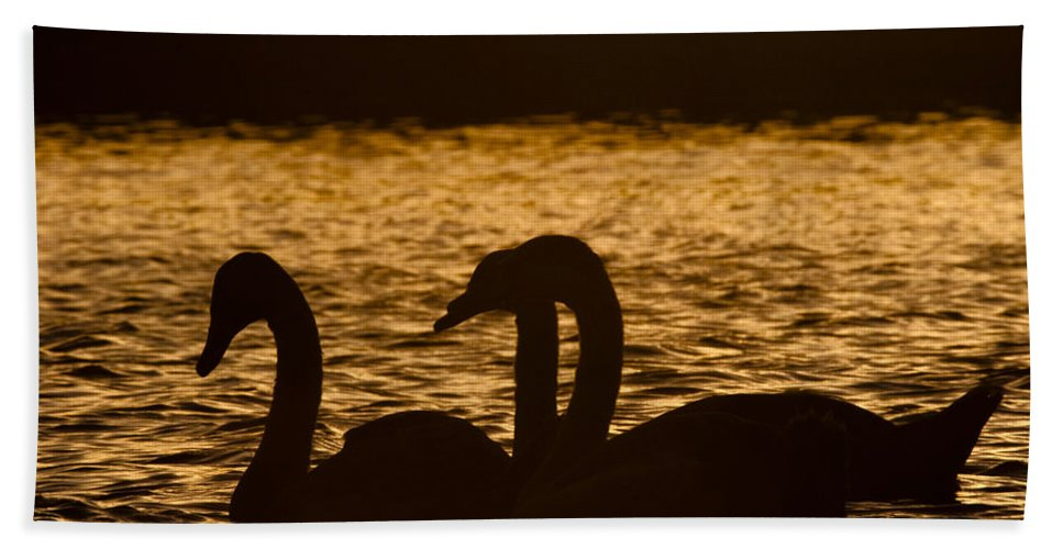 Water Hand Towel featuring the photograph The Liquid Gold by Angel Ciesniarska