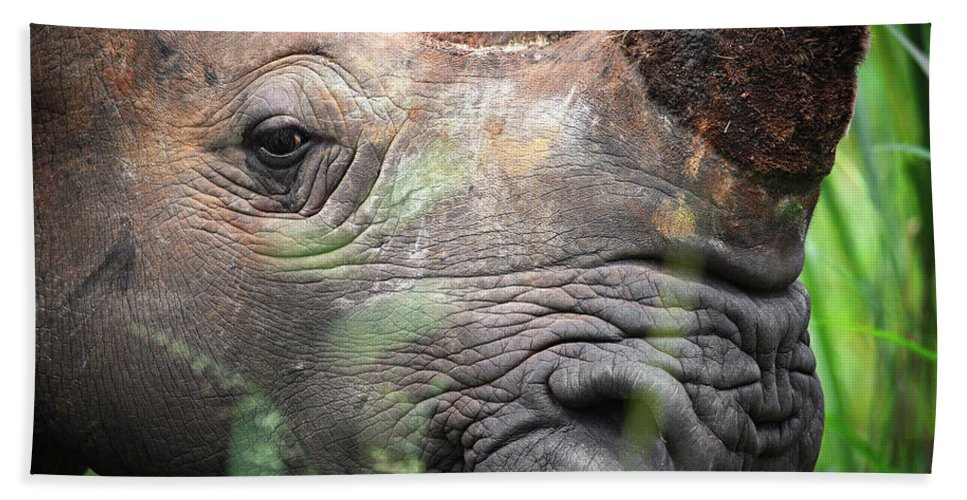 Africa Hand Towel featuring the photograph The Look Of Love by Rick Furmanek