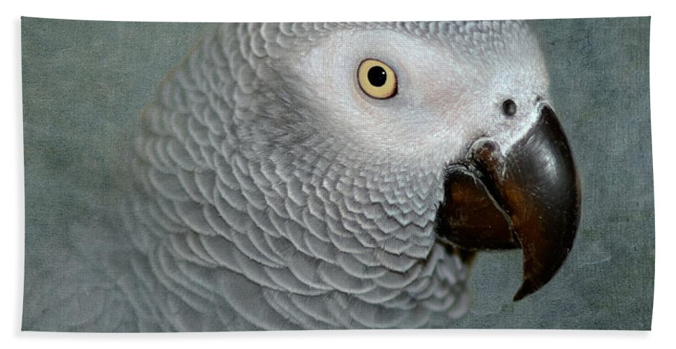 Parrot Bath Sheet featuring the photograph The Love Of A Gray by Betty LaRue