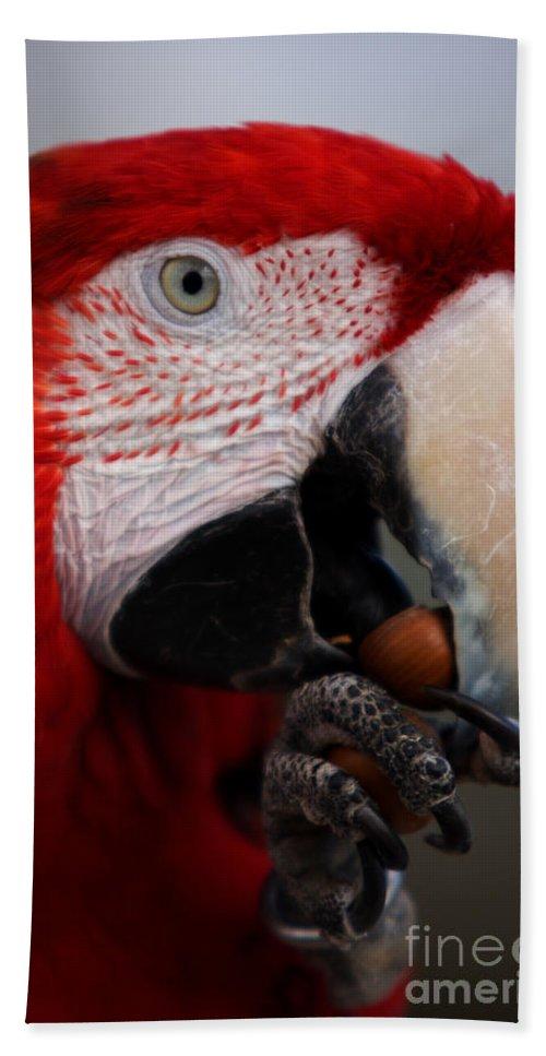 Macaw Bath Towel featuring the photograph The Macaw by Angel Ciesniarska
