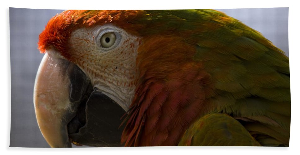 Macaw Hand Towel featuring the photograph The Macaw Portrait by Angel Ciesniarska