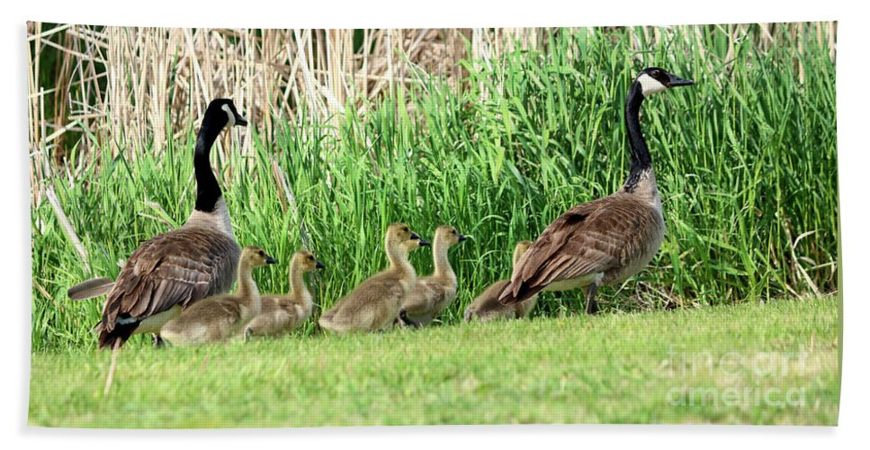 Wildlife Bath Sheet featuring the photograph The March by Lori Tordsen