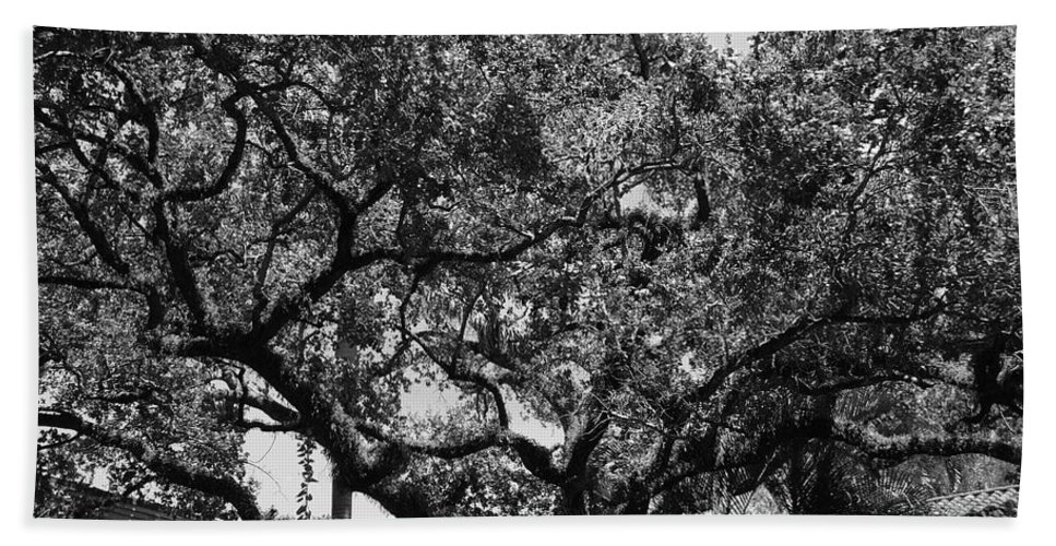 Black And White Bath Towel featuring the photograph The Monastery Tree by Rob Hans