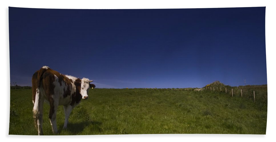 Cow Bath Towel featuring the photograph The Moody Cow by Angel Ciesniarska