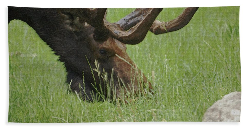 Moose Bath Sheet featuring the photograph The Moose by Ernie Echols