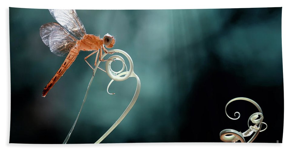 #dragonfly Bath Sheet featuring the photograph The Morning Story by Abdul Gapur Dayak