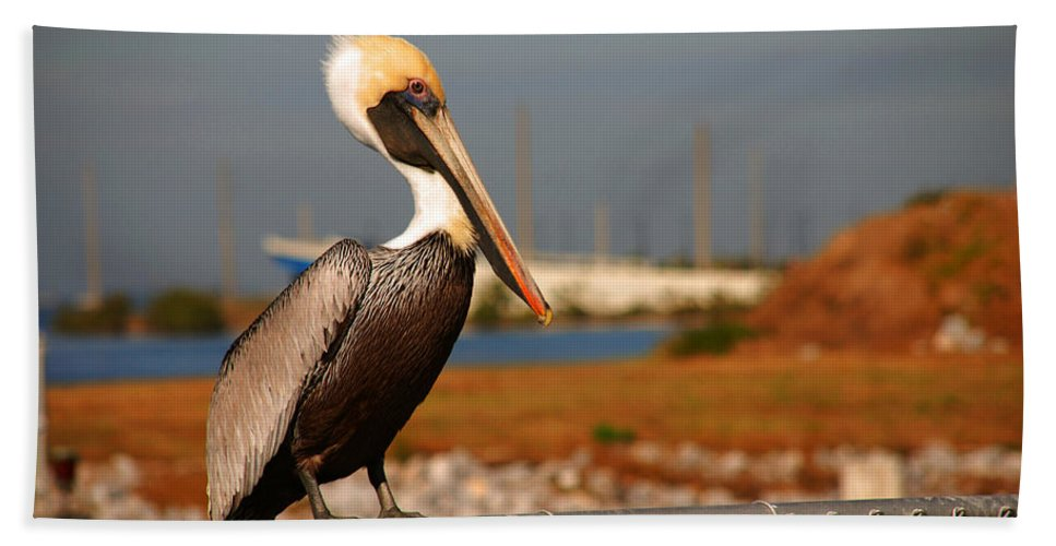 Pelican Hand Towel featuring the photograph The Most Beautiful Pelican by Susanne Van Hulst