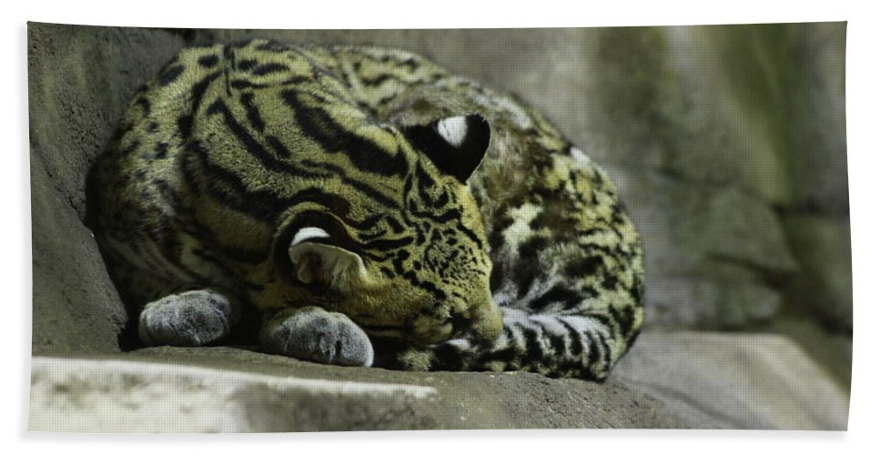 Cat Hand Towel featuring the photograph The Napping Rock by Laddie Halupa