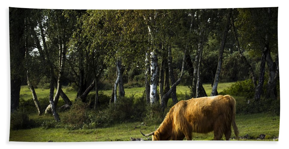 Heilan Coo Bath Towel featuring the photograph the New forest creatures by Angel Ciesniarska