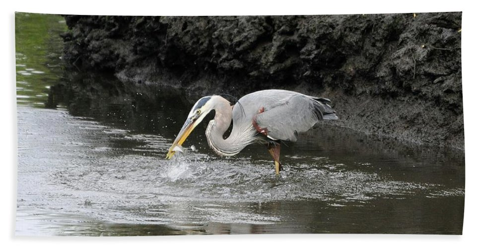 Great Blue Heron Bath Sheet featuring the photograph The One That Got Away by Al Powell Photography USA