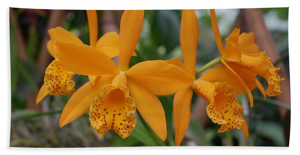 Macro Bath Towel featuring the photograph The Orange Orchids by Rob Hans