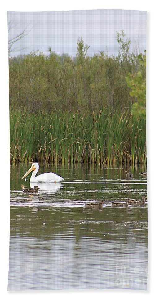 Pelican Hand Towel featuring the photograph The Pelican And The Ducklings by Alyce Taylor