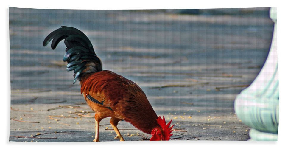 Rooster Bath Sheet featuring the photograph The Picking Rooster by Susanne Van Hulst