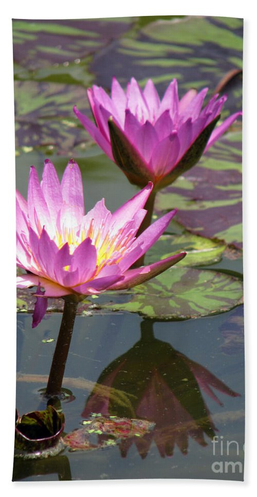 Lillypad Hand Towel featuring the photograph The pond by Amanda Barcon