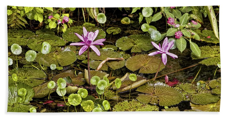 Flowers Hand Towel featuring the photograph The Pond by Madeline Ellis