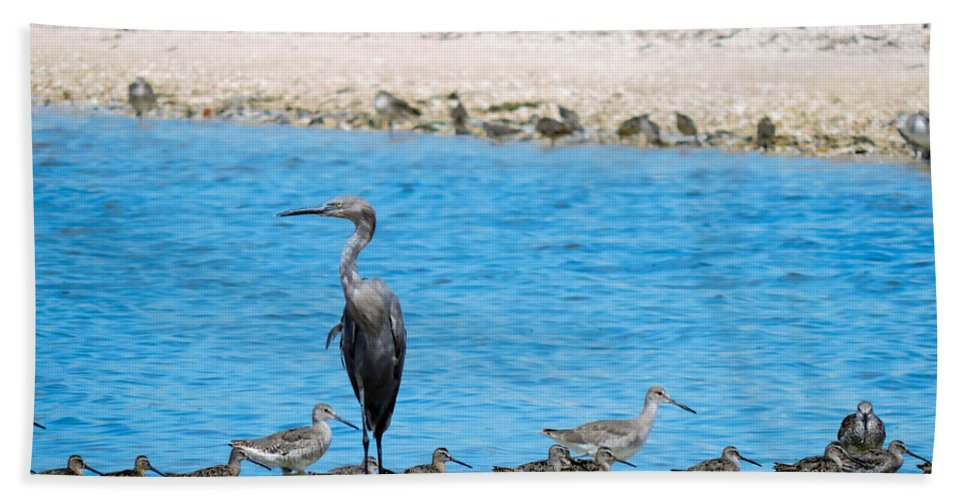 Blue Heron Hand Towel featuring the photograph The Procession by Marilee Noland