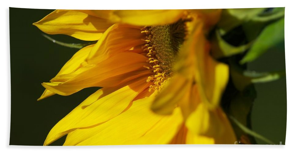 Sunflower Hand Towel featuring the photograph The Promise by Sharon Talson