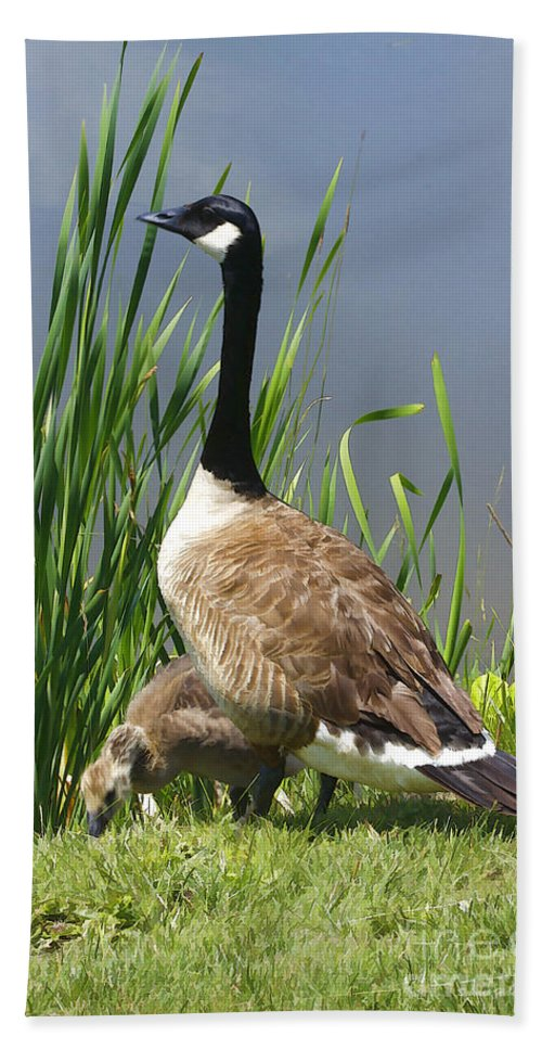 Goose Hand Towel featuring the photograph The Protector by Deborah Benoit