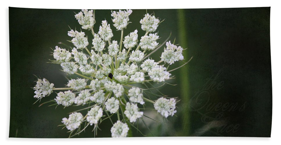 Queen Anne's Lace Hand Towel featuring the photograph The Queens Lace by Teresa Mucha