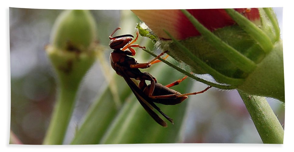 Red Wasp Hand Towel featuring the photograph The Real Gardener 2 by Robert Meanor