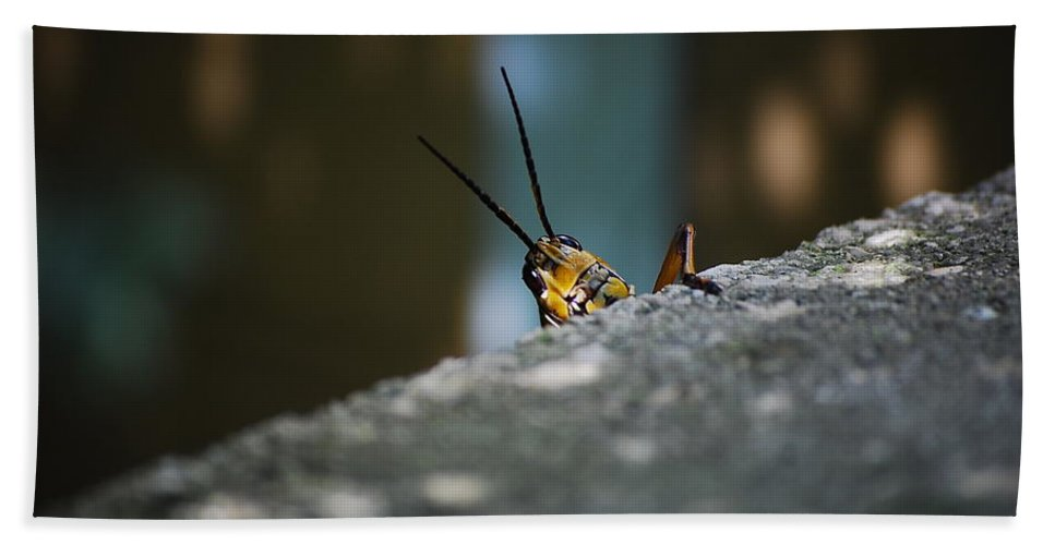 Bugs Hand Towel featuring the photograph The Real Hopper by Robert Meanor
