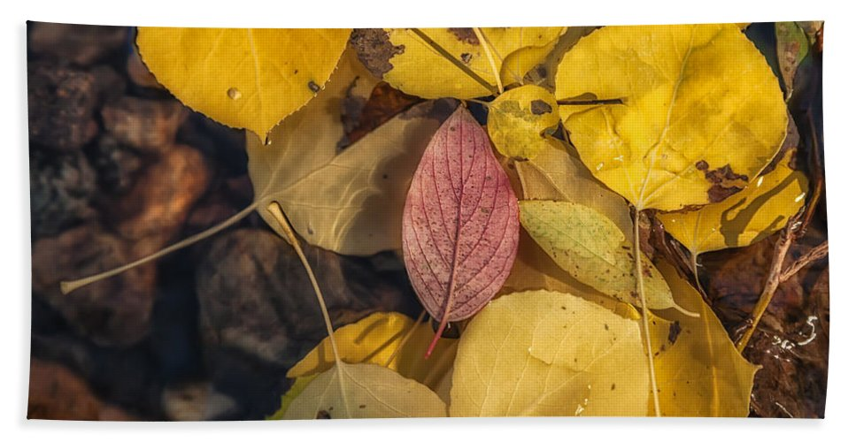 Fall Hand Towel featuring the photograph The Red Leaf by Jonathan Nguyen