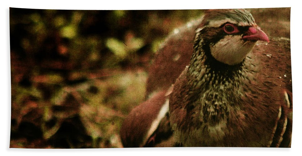 Partridge Bath Sheet featuring the photograph The Redlegged Partridges by Angel Ciesniarska