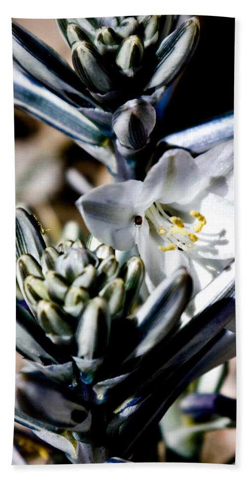 Desert Lily Bath Sheet featuring the photograph The Shy Desert Lily by Chris Brannen