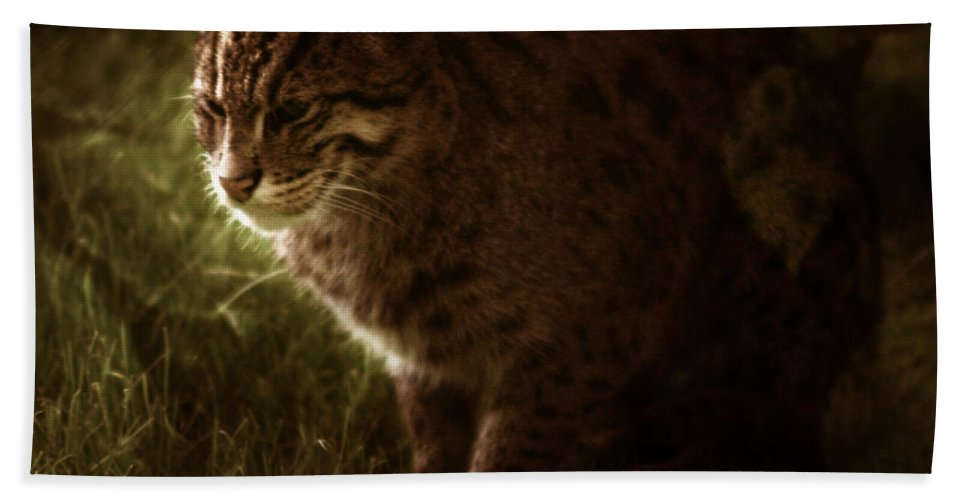 Sleepy Bath Sheet featuring the photograph The Sleepy Wild Cat by Angel Ciesniarska