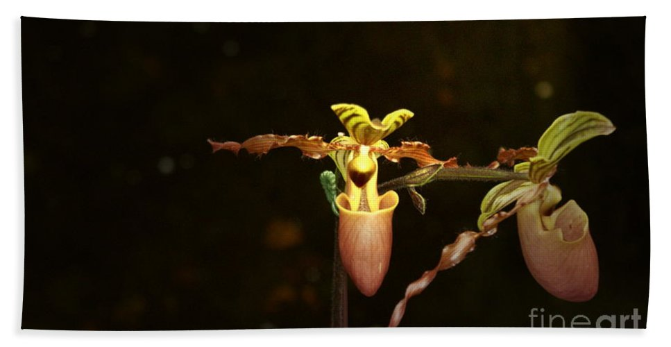 Lady Slipper Orchids Bath Towel featuring the photograph The Slippers by Joanne Smoley