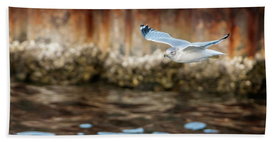 Seagull Hand Towel featuring the photograph The Soaring Gull by Melissa Sniderhan
