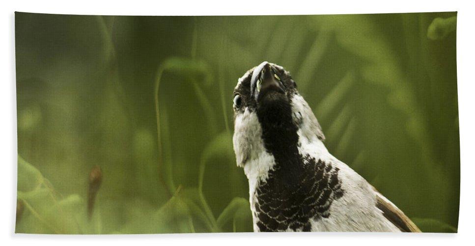 Sparrow Bath Sheet featuring the photograph The Sparrow by Angel Ciesniarska