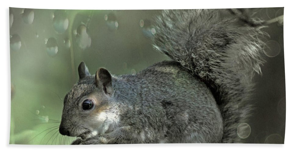 Squirrel Hand Towel featuring the photograph The Squirrel by Angel Ciesniarska