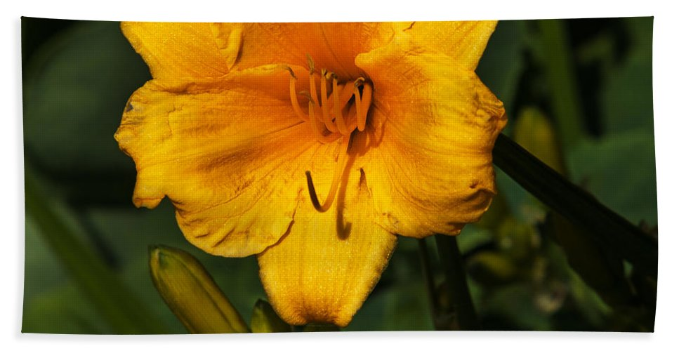 Heron Heaven Hand Towel featuring the photograph The Summer Blooms by Edward Peterson
