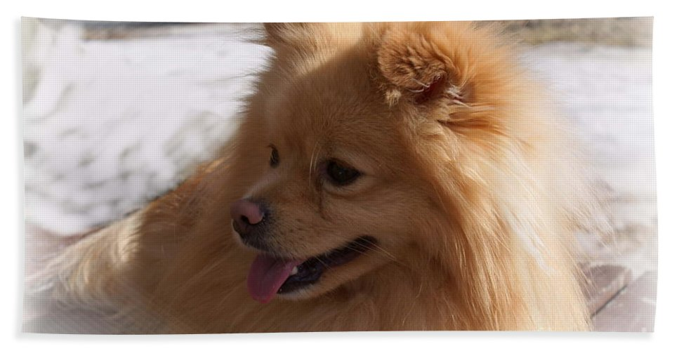 Pomeranian Dog Bath Towel featuring the photograph The Sun On My Back by Joanne Smoley