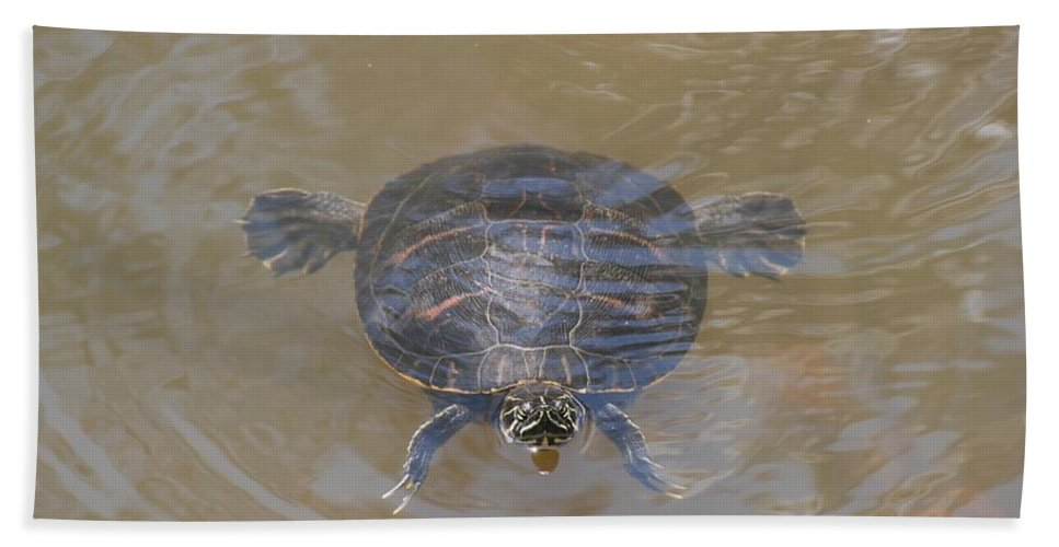 Water Hand Towel featuring the photograph The Swimming Turtle by Rob Hans