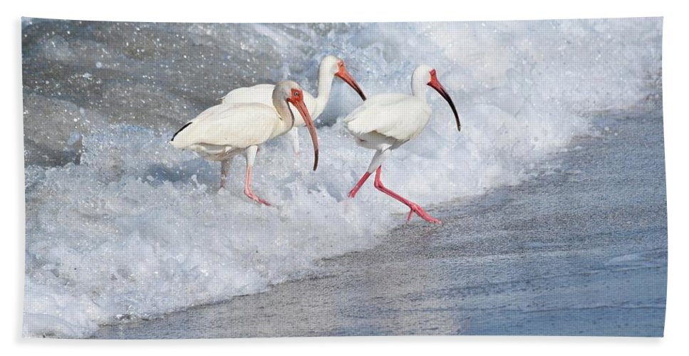 Birds Bath Sheet featuring the photograph The Tide Of The Ibises by Jenny Regan